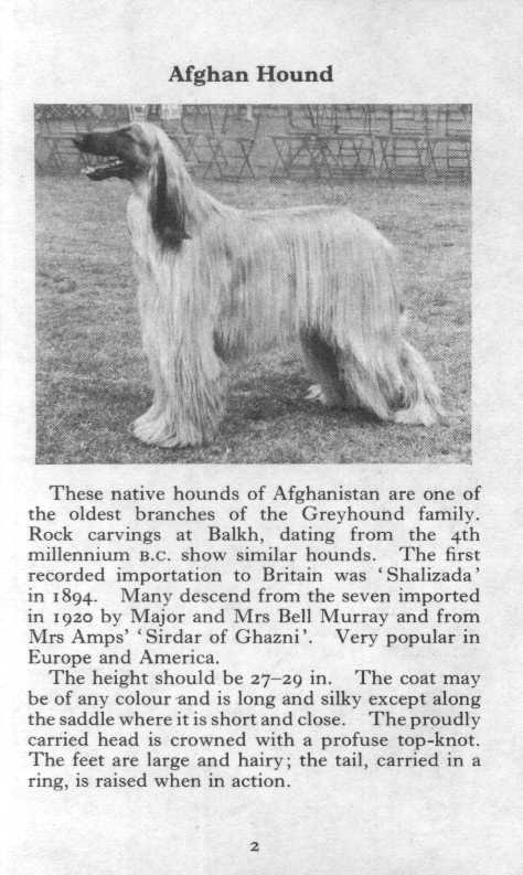 Afghan Hound - Illustrated Breed Description