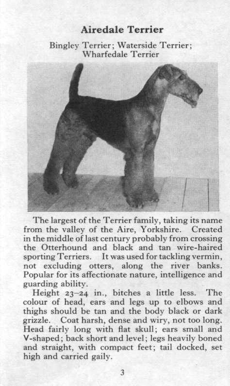 Airedale Terrier Breed Description