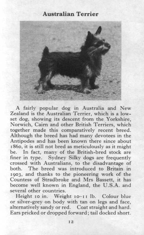 Australian Terrier Breed Description