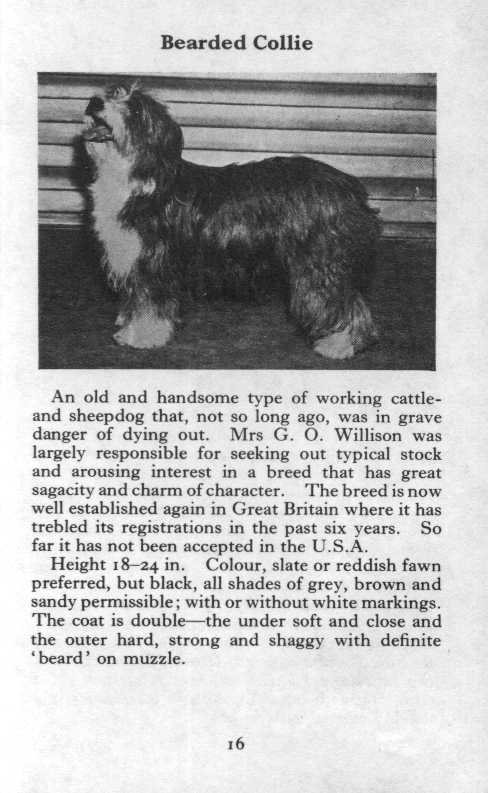 Bearded Collie Breed Description