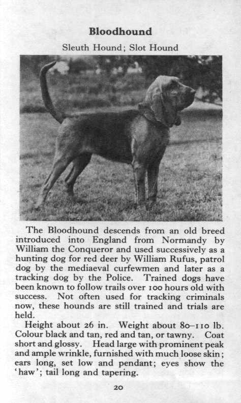 Bloodhound Breed Description