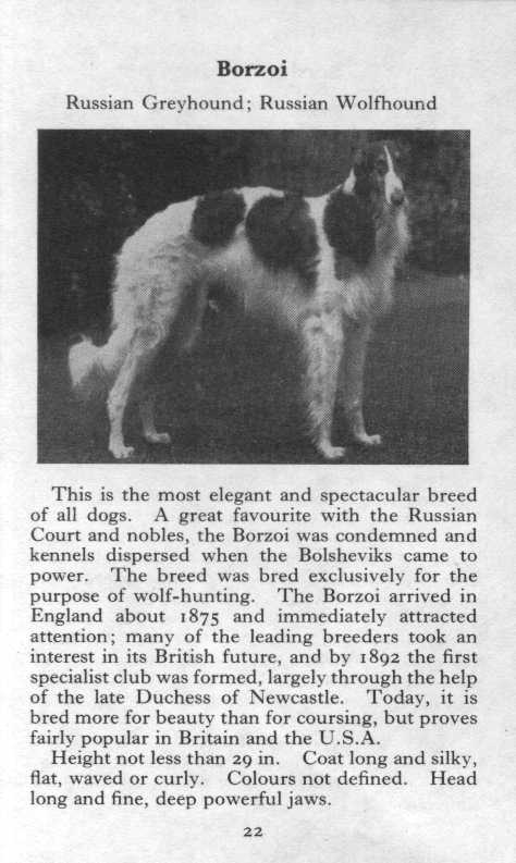 Borzoi Breed Description