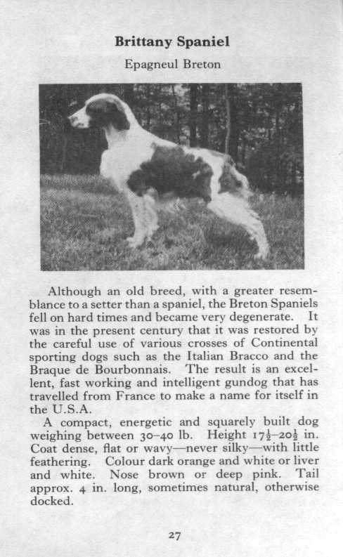 Brittany Spaniel Breed Description