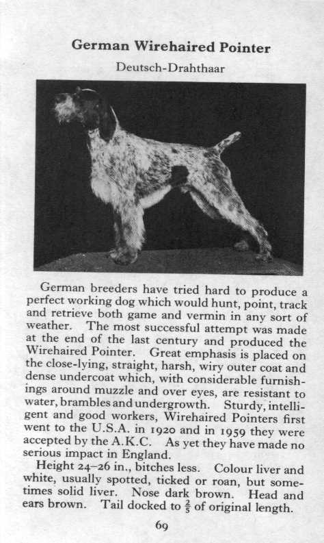 German Wirehaired Pointer Breed Description
