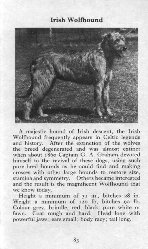 Irish Wolfhound Breed Description