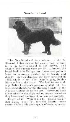 Newfoundland Breed Description