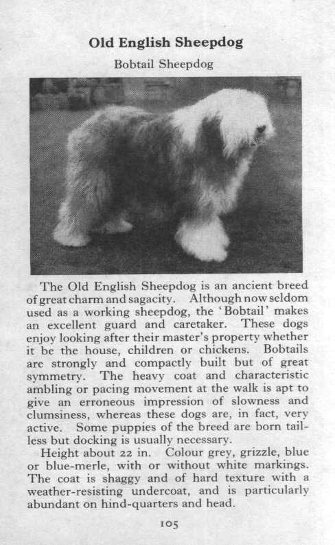 Old English Sheepdog Breed Description