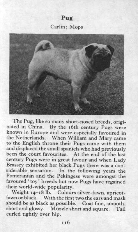 Pug Breed Description