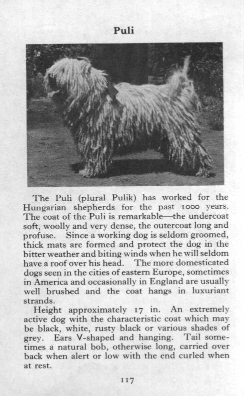 Puli Breed Description