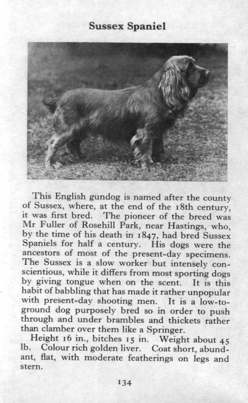 Sussex Spaniel Breed Description