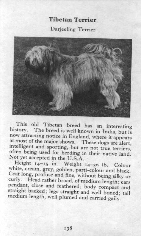 Tibetan Terrier Breed Description
