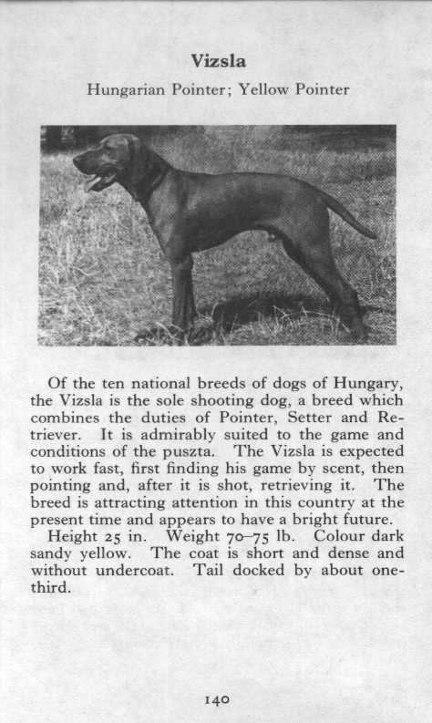 Vizsla Breed Description