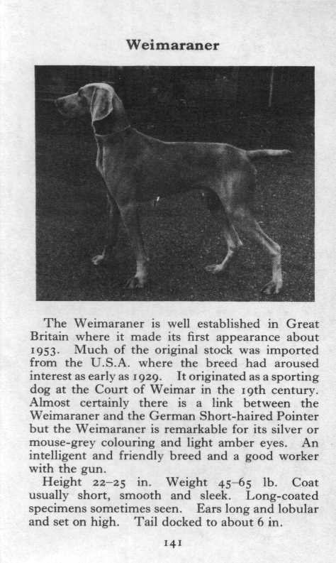Weimaraner Breed Description
