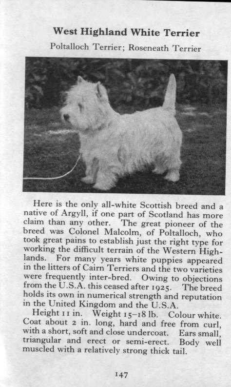 West Highland White Terrier Breed Description
