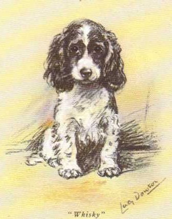 Cocker Spaniel Card - Lucy Dawson