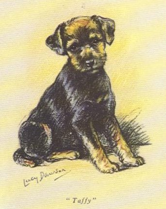 Welsh Terrier Card - Lucy Dawson