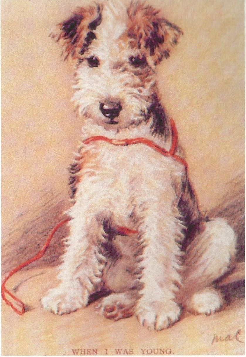 Wire Fox Terrier Print - Lucy Dawson - Click to Enlarge
