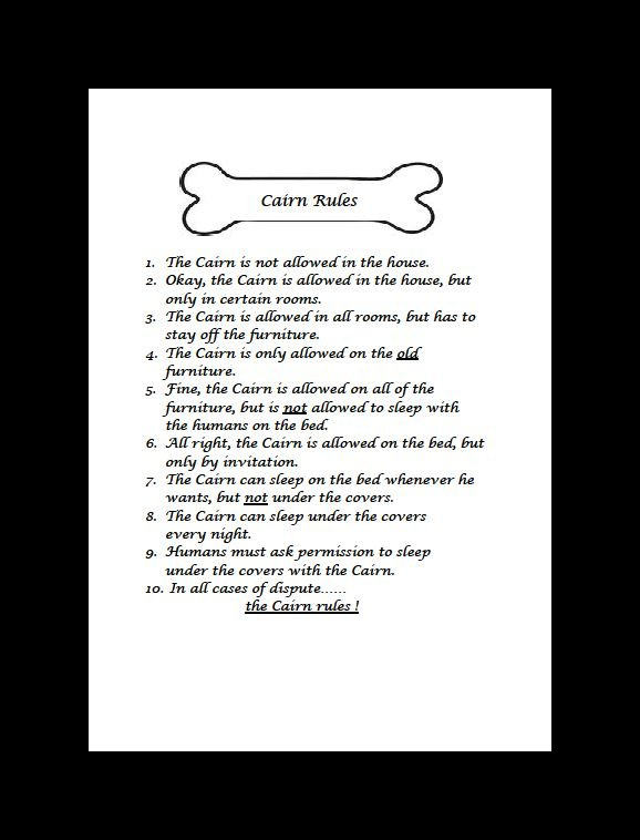 Cairn Terrier Rules Dog Print