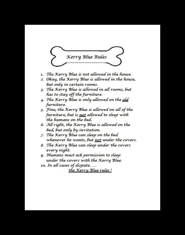 Kerry Blue Terrier Rules Dog Print